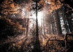 ¿Una necesaria reforma a la legislación ambiental?