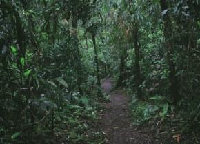Sector ambiente refuerza acciones para cumplir la sentencia que declara a la Amazonia como sujeto de derechos
